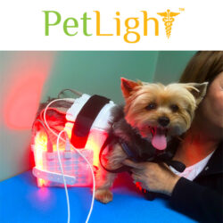 Dog getting back treated with PetLight